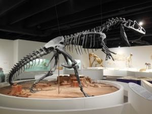 Dinasaur (800x600)