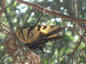 Butterfly (800x600)