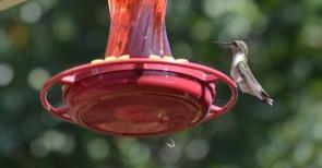 Hummingbird 1 (800x418)
