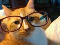 Buddy Glasses