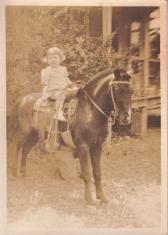 Horse (570x800)