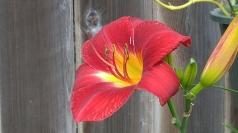 Flower Power (800x450)