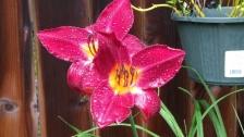 Flower Three (800x450)