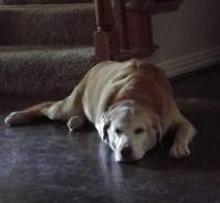 Tucker Sad (800x742)
