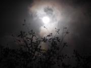 moon-1-800x600