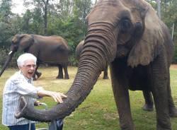 celeste-and-the-elephants