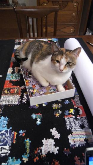 Peach in puzzle box